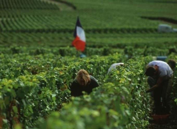 Focus sul mondo del vino in Francia, dati 2016 by OVSE