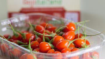 Goji Italiano: scoperte nuove virtù della bacca della salute