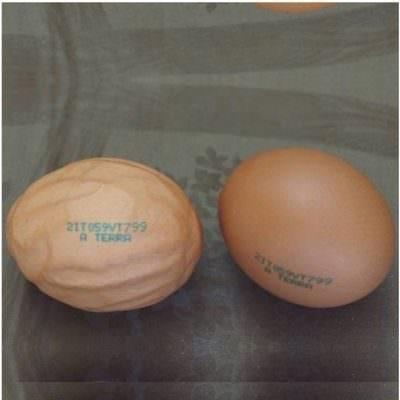L'uovo UFO di Bologna: Stranezze di natura o manipolazioni umane?