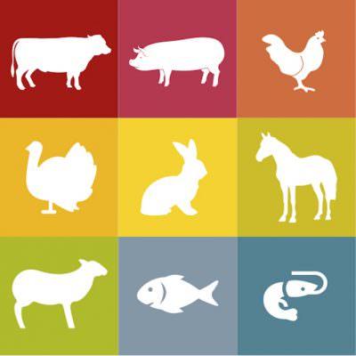 Quanta carne consumano gli italiani? La metà di quanto stimato fino ad oggi