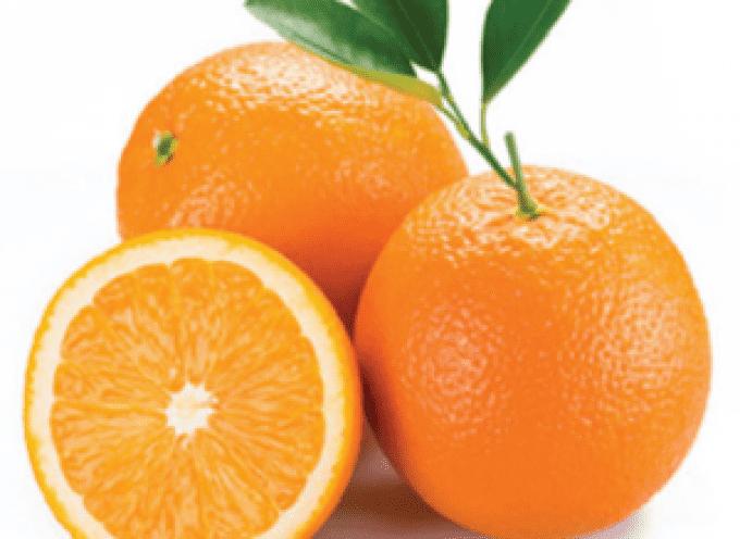 E-commerce arance direttamente dal produttore: da novembre le Naveline senza semi
