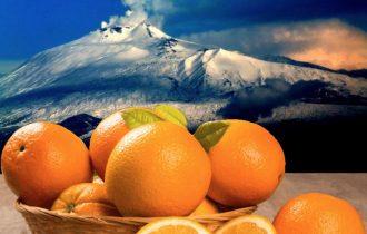 A Natale arance di Sicilia sotto l'albero direttamente dal produttore, appena colte