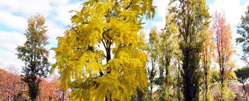 Gli alberi di Roma, tra i colori dell'autunno e l'incuria di Parchi e giardini