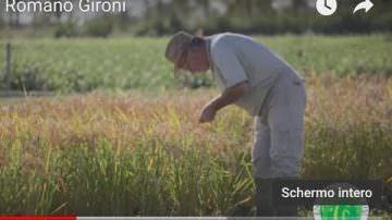 Romano Gironi, Centro Ricerche sul Riso (Video)