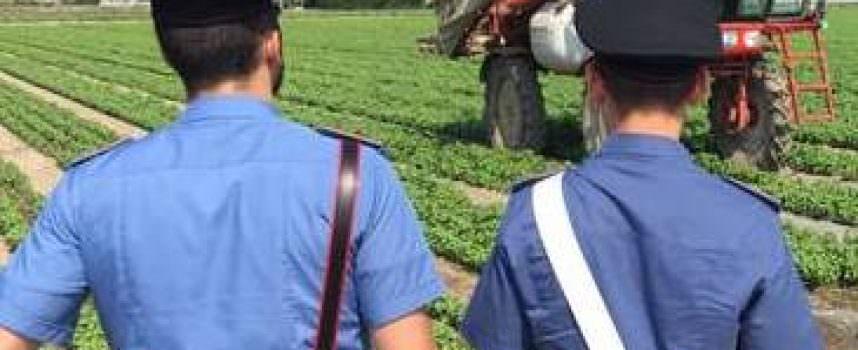 Ispezione e controlli produzione agroalimentari BIO: sì ma a quale prezzo?