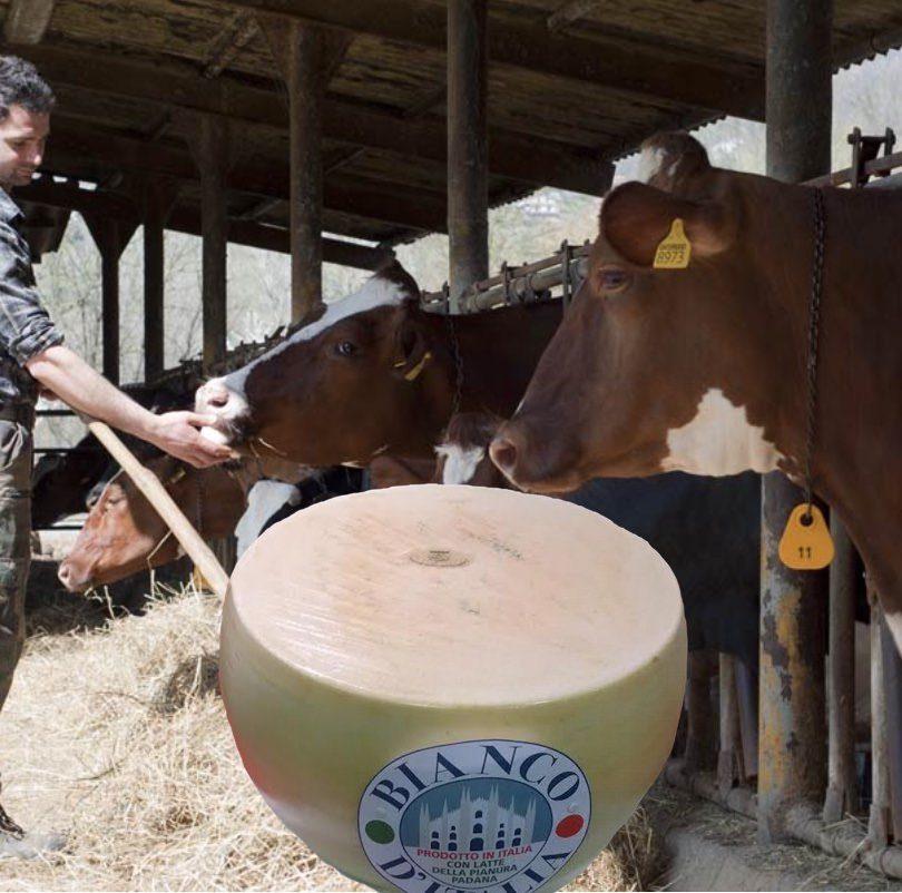 Re Bianco d'Italia, formaggio a pasta dura di qualità – da provare