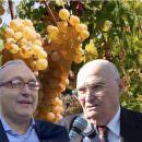 Malvasia, un nome magico per un grande vino bianco italiano