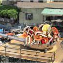 Maxi padella protagonista alla Festa del Pescato di Paranza di Castellabate