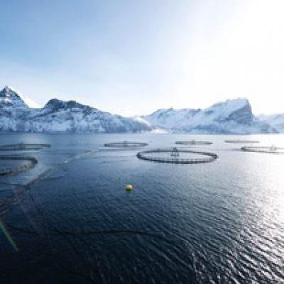 Pesce, cresce il consumo di salmone norvegese