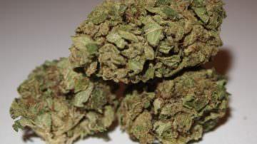 Da Alassio la prima granita alla cannabis del mondo