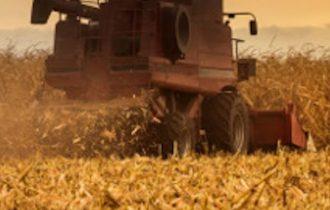 La pasta si fa col grano duro o col grano turco?