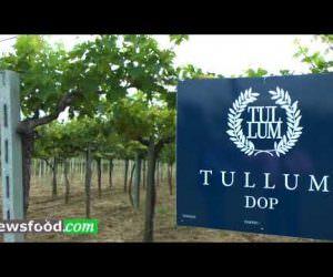 Antonio Citti agronomo del Consorzio Tutela Dop Tullum (Video)