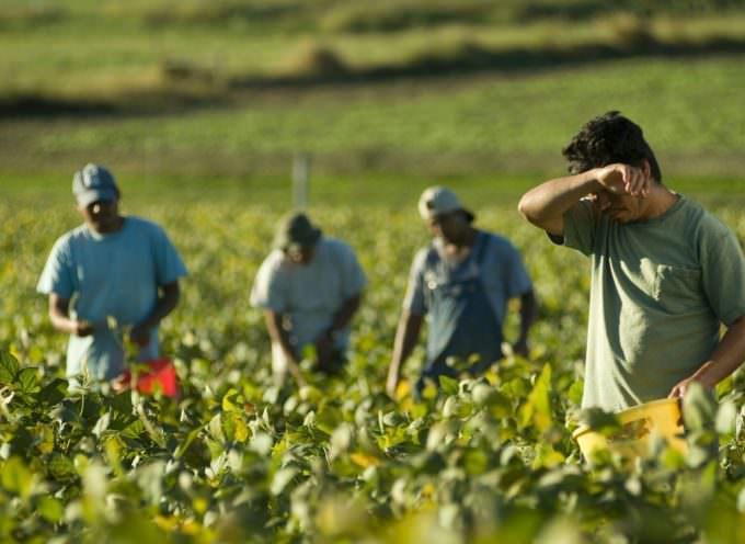 Agricoltura: prezzi bassi? Siamo complici del caporalato