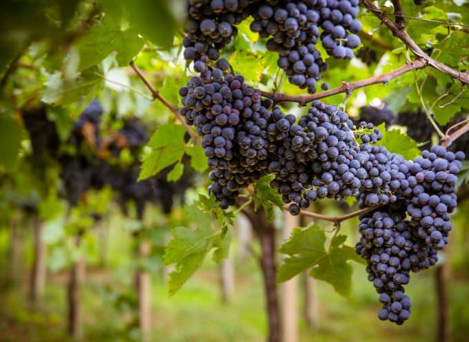Montepulciano d'Abruzzo DOP Riserva di Cantina Tollo, Tre Bicchieri nella Guida Gambero Rosso