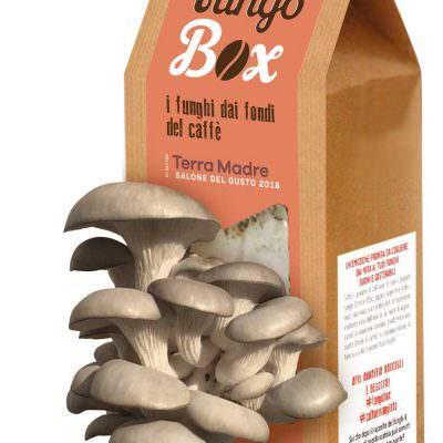 Fungo Box, funghi dai fondi di caffè