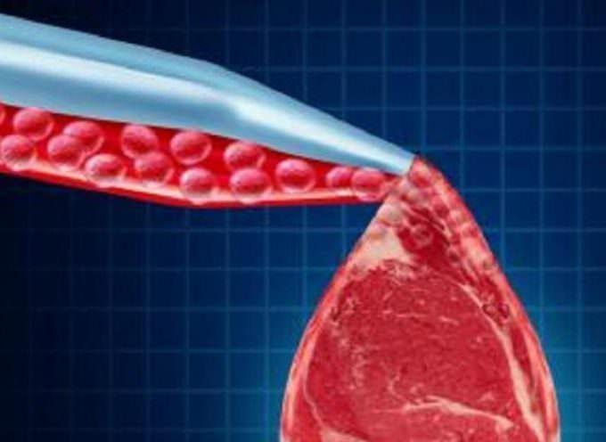 NO, assolutamente NO, alla carne sintetica
