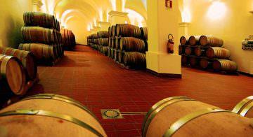 Vigneti e vini biologici Gorghi Tondi nell' Oasi Naturale WWF