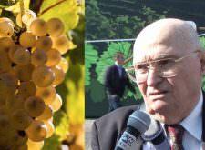 Malvasia, vino dimenticato fra i grandi vini di Slow Wine