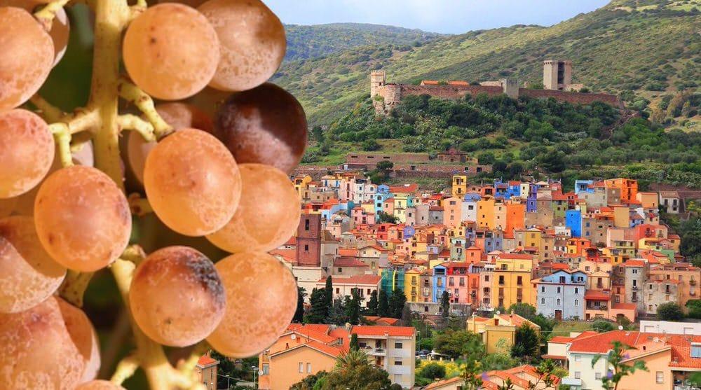 Malvasia di Bosa… in attesa del Bosa Wine Festival 2019 e qualche assaggio