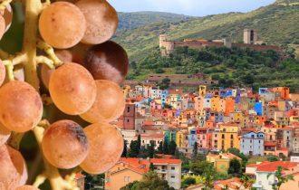 Malvasia di Bosa… Focus in attesa del Bosa Wine Festival 2019 (7 – 8 giugno)