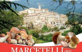Il 14 luglio il fungo porcino è il grande protagonista a Marcetelli