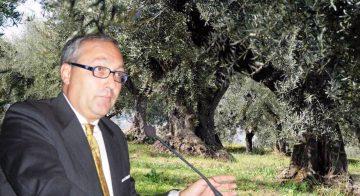 Evo, Extra Vergine di Oliva: la saggezza millenaria dell'ulivo