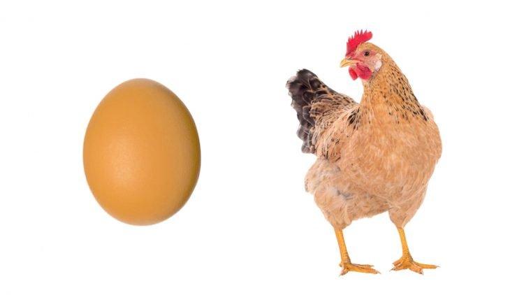 Polli e uova italiani: una miniera salutistica da rivalutare – Fiera 1000naria di Gonzaga – Mantova