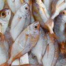 Scarto del Pesce? Un mito da sfatare