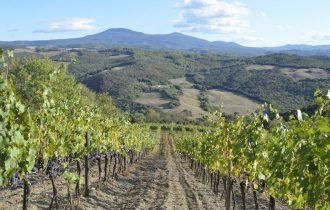 Assaggio dei Vini della Val d'Orcia by Giampietro Comolli