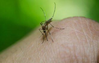 Contro le zanzare  i rimedi naturali che funzionano