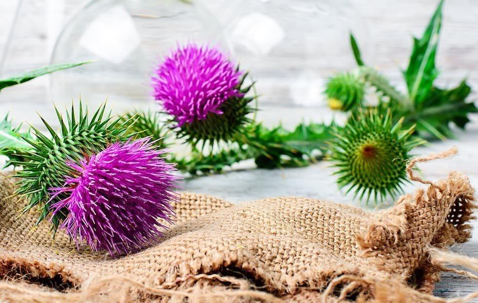 Bardana: l'erba che depura… antibatterica, antiossidante, antinfiammatoria…