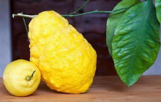 Cedro: un frutto da riscoprire