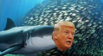 Dazi USA – Trump e la moderna guerra all'Europa – Comunicato Coldiretti e intervista a Ettore Prandini