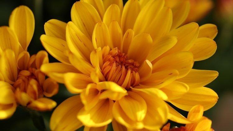 Quasi 8 mln di italiani comprano fiori nel ponte di Ognissanti