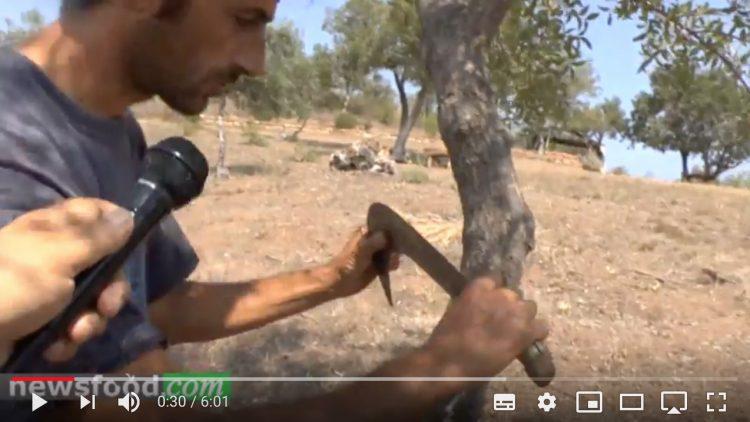 Mario Cicero, produttore di manna Madonita nel suo faggeto (Video)
