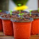 Bakker: dai fiori alle fragole, ai mirtilli, alle piante da frutto da balcone