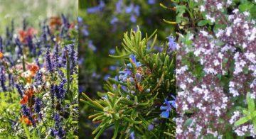Tre piantine aromatiche che fanno bene alla salute e alla cucina
