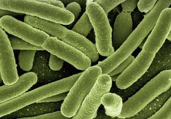 Probiotici e Prebiotici: cosa sono, a cosa servono ? E i simbiotici?