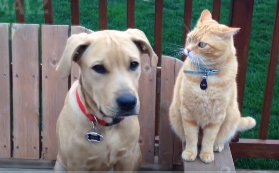 CoronaVirus e animali, nCoV-2019, e gli animali domestici… è allarme?