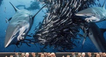 Giovani oggi tra sardine e pescecani – Millennials e GenerazioneZeta… chi sono?