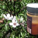 Manuka honey: Miraculous superfood but only if it is UMF certified (English and Italian text)