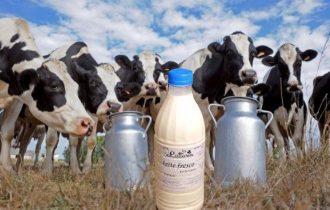 Allevatori pugliesi nel panico, richiesta riduzione prezzo latte alla stalla