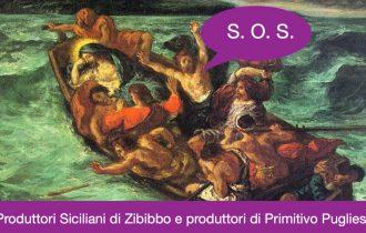 ZIBIBBO E PRIMITIVO SULLA STESSA BARCA… vignaioli in guerra contro Regione Siciliana