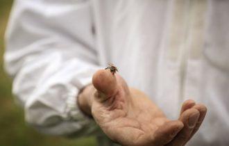 Proclamata dall'ONU la Giornata Mondiale delle api il 20 maggio