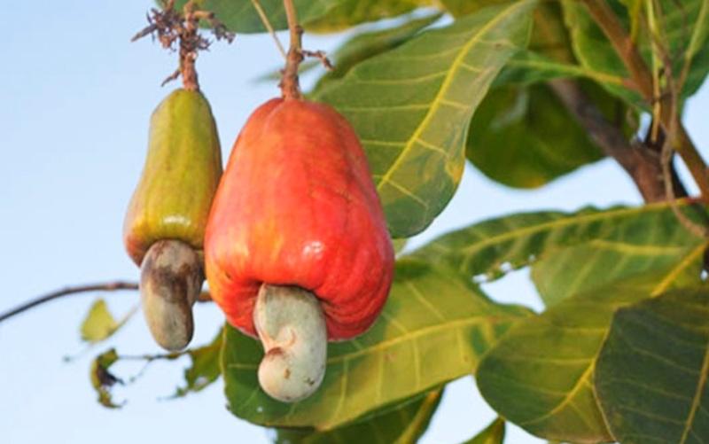 Frutta secca: fonte di folati e vitamine del gruppo B