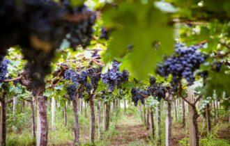 Cantina Tollo: un viaggio nel mondo del vino lungo sessant'anni