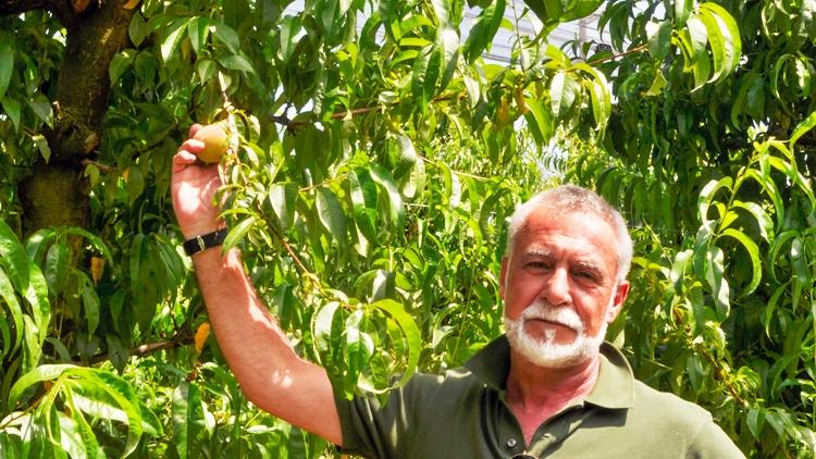Parte la campagna delle pesche nettarine di Romagna IGP
