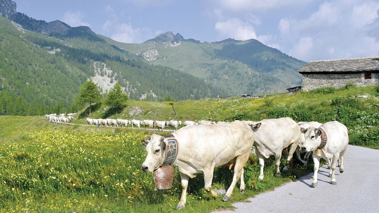 Compral Carni, nuove azioni in Italia ed Europa con il Coalvi per ampliare il mercato della Piemontese