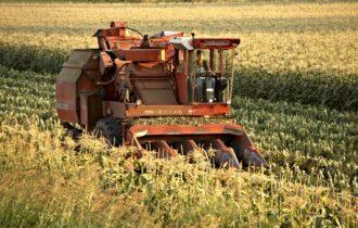 Conserve Italia, parte la campagna del mais dolce