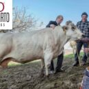 Carne Fassona on line, nasce l'e-commerce macelleriaoberto.it